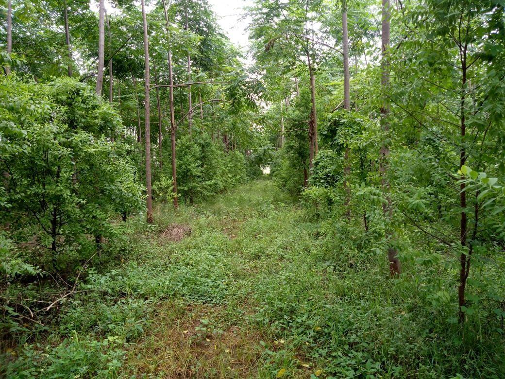 100 Sq Yards 3 Lacs Only With Sandal Wood Plantation(100% Genuine Returns)