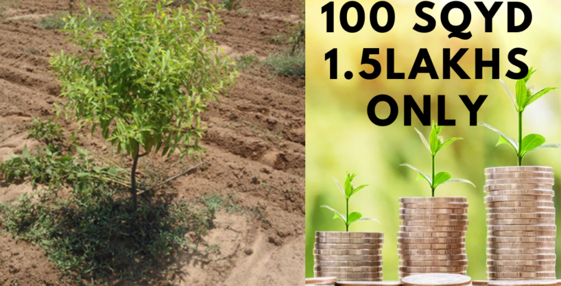 100 Sq Yards 1.5 Lacs Only With Sandal Wood Plantation(100% Genuine Returns)